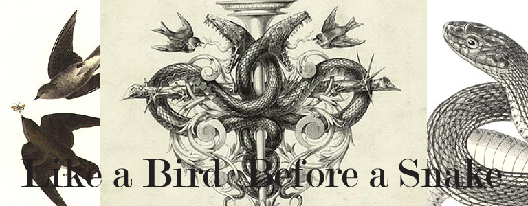 snake bird slider final